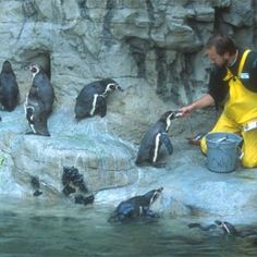 So You Want to be a Zookeeper? :: Saint Louis Zoo Things you can do today to see if zookeeping is for you! St Louis Zoo, Livestock Farming, Zoo Keeper, Work With Animals, Wildlife Conservation, Places Of Interest, Zoology, Zoo Animals, Science And Nature