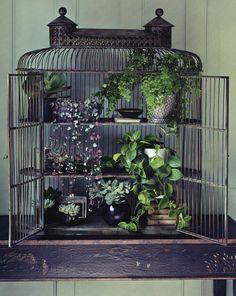 Birdcage - small plant display. Repurposed and beautiful! Indoor Gardening Idea / Plant display