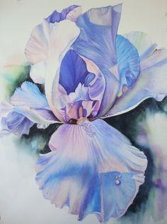 Iris Watercolor Painting Original Limited Edition Giclee Print Iris Flower Art Iris by Diana M Turner, 11 x 14 by Dianamturnerart on Etsy