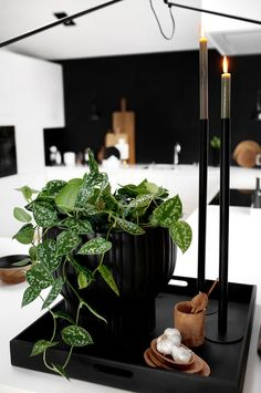 Kitchen Decor, Kitchens, Indoor, Mood, Table Decorations, Green, Flowers, Plants, Inspiration