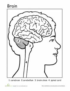 Wk 4 - Brain worksheet, puzzle and playdoh activity. From The Mrs ...