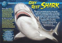 Name: Gray Reef Shark Category: Monsters of the Deep Card Number: 27 Front: Grey Reef Shark Monsters of the Deep Card 27 front Back: Grey Reef Shark Monsters of the Deep Card 27 back Trading Card: Marine Archaeology, Shark Watches, Types Of Sharks, Ocean Ecosystem, Reef Shark, Dangerous Animals, Underwater Creatures, Wild Creatures, Marine Biology