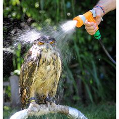 Probably Not The Best Way To Clean An Owl