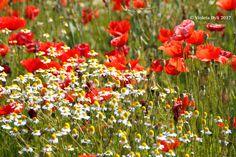 Poesia della primavera