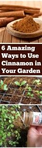 6+Amazing+Ways+to+Use+Cinnamon+in+Your+Garden