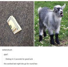 normally I don't pin stuff like this but that goat is cute