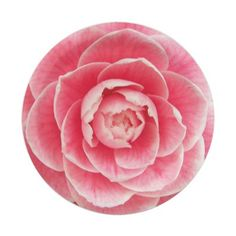 Camellia Blossom Floral 7 Inch Paper Plate #partyideas #partysupplies
