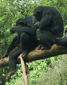 Macacos - Zoológico de São Paulo - photo by Renato Aguiar