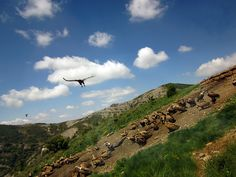 Nature photography and a vulture feeding in Catalonia