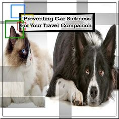 Provide amazing features for your pets by opting for vets. These vets provide amazing services to improve the health of your pets. St Ives, North Shore, Your Pet, Traveling By Yourself, Pets, Amazing, Health, Animals, Animales