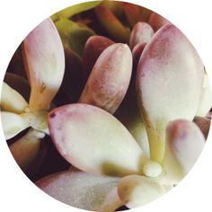 Sprout Love - www.girlnesting.com #plants