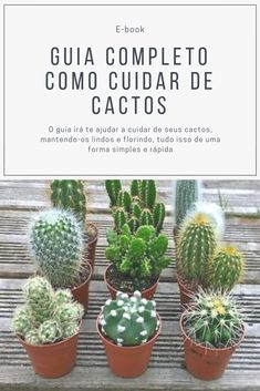 How to Propagate Your Succulents Successfully Cactus Types, Types Of Succulents, Cacti And Succulents, Planting Succulents, Cactus Planta, Cactus Y Suculentas, Eco Garden, Indoor Garden, House Plants Decor
