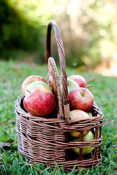 Freshly picked apples in a cute little basket