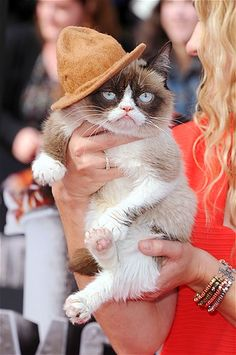Image: Grumpy Cat attends the 2014 MTV Movie Awards at Nokia Theatre L.A. Live in Los Angeles. (© Steve Granitz/WireImage/Getty Images)