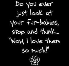 Do you I do probably over 100 yimes a day! Puppy Love Quotes, Cat Quotes, Animal Quotes, Baby Puppies, Baby Dogs, Dogs And Puppies, Doggies, Crazy Cat Lady, Crazy Cats