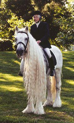Fell Pony | Fell Pony Stallion | Flickr - Photo Sharing!