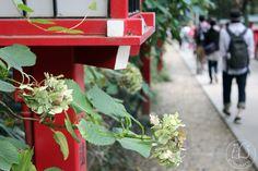 Oravanpesä: Japani 2013, Takao-san.