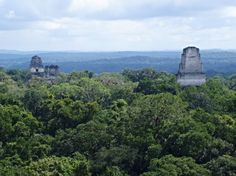 The view of the Temples One, Two and Three as seen from the top of Temple Four at #Tikal. #BelizeVacationPackages #SabreWingTravel