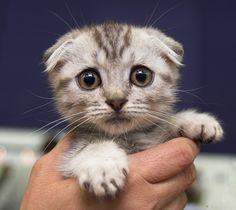 ちっこい子猫のかわいさって犯罪級! (*´д`*)