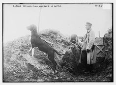C.1914 German Officers Dog Wounded in War WWI by InterestingPhotos, $7.95
