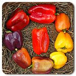 Organic Iko Iko Bell Pepper- want to try these!