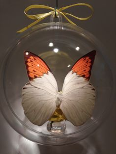 """""""Hebomia glaucippe"""" from The Philippines. 100 mm clear ornament $20.00 US Butterfly Ornaments, Clear Ornaments, Philippines, Christmas Bulbs, Around The Worlds, Holiday Decor, Crafts, Home Decor, Manualidades"""