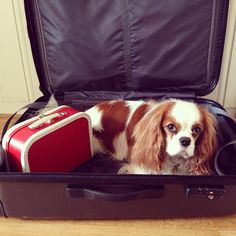 Winston - As far as I can tell you have remembered the most imoprtant thing. Now come on and close the suitcase