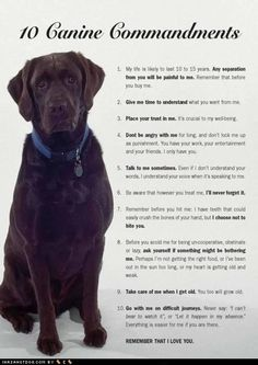 Ten Canine Commandments - this made me cry. Love my furry babies.