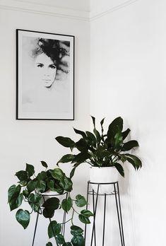 Ces plantes vertes placées dans des supports en métal apportent de la couleur au décor monochrome.