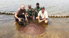 Nat Geo Zeb Hogan stingray fishing Thailand. Nat Geo explorer Zeb Hogan returned to the Maeklong River in Thailand on a short research trip.