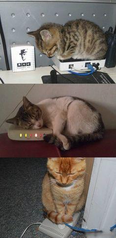 """我终于知道""""调制解调器""""为什么会被叫做""""猫""""了。"""