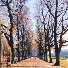 Enjoy #Brussels #parks & #gardens in all seasons pic by @loewe7