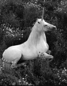 My mother has a theory that all pure white horses are unicorns. We just live in a world where we can no longer see magic, and cannot see their horns.