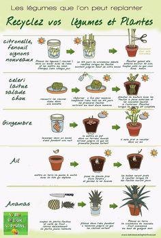 Découvrez ceux que l'on peut replanter