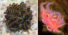 51 Sea Slugs That Prove Aliens Already Live On Planet Earth | Bored Panda