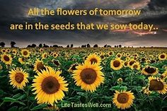 All the flowers of tomorrow are in the seeds that we sow today.  Credit: LifeTastesWell.com