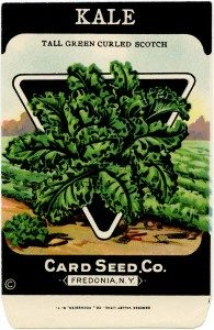 card seed co, vintage garden clip art, old fashioned seed package, vintage seed…