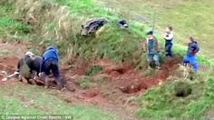 Shocking photos show the moment a fox is dragged out of its hole by hunters and shot in front of children as young as FIVE | STOP ANIMAL ABU...