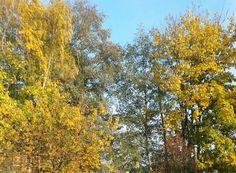 Herfst op het Ut Hôgeind Rijkevoort