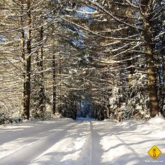 20 reasons why running in the snow is the BEST. (No seriously, it's awesome.)