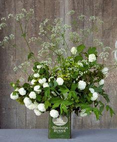 Cow parsley, guelder rose, Solomon's Seal, euphorbia - Shane Connolly