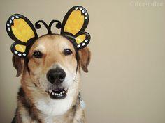 bumblebee dog!