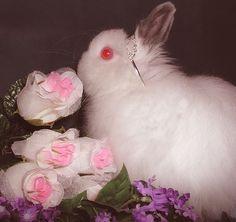 bunny, roses, & albino