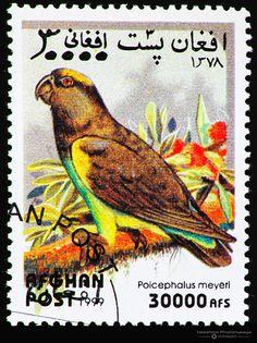 Afghanistan 1999 Birds stamp - Meyer's Parrot (Poicephalus meyeri) 30000 AFS