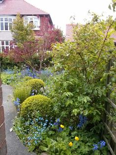 The front garden, mid May