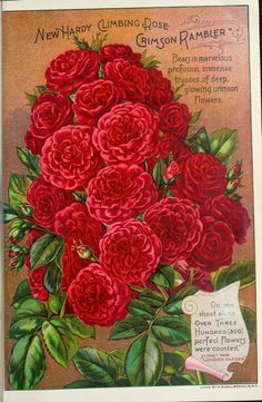 The Dingee & Conard Co -  Our new guide : autumn 1897