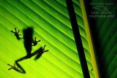 Rainforest Macro Photography