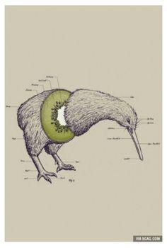 Kiwi ×2