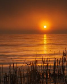 Sunrise Through The Fog Poster by Scott Norris.  All posters are professionally printed, packaged, and shipped within 3 - 4 business days. Choose from multiple sizes and hundreds of frame and mat options.