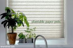 Celebrate Earth Day with these easy plantable paper pots!